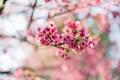 Picture flowers, Sakura, bokeh, tree, flowering, pink, branches, spring