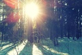 Picture winter, sun.trees, the sun's rays, snow, winter forest