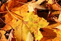 Picture autumn, nature, sheet, macro photo