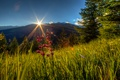 Picture forest, grass, the sky, the rays of the sun, greens, trees, mountains, summer, Switzerland, flowers