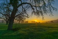 Picture grass, sunset, mountains, tree
