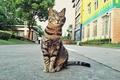 Picture look, street, Koshak, cat