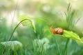 Picture leaves, grass, stem, snail, greens, bokeh