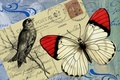 Picture background, bird, butterfly