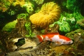Picture Wallpaper, fish, water, underwater world