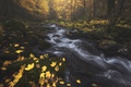 Picture forest, autumn, trees, stream, nature, river, foliage