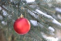 Picture branch, new year, spruce, decoration, Christmas, ball