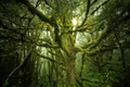 Picture nature, moss, forest, branches, tree