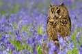 Picture flowers, feathers, owl, bird, bells