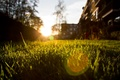 Picture summer, the sun, macro, rays, light, nature, photo, Wallpaper, the evening, blur, weed, wallpapers, focus