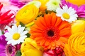 Picture flowers, flowers, tulips, tulips, chamomile, gerberas, gerbera, daisies