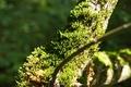 Picture forest, summer, grass, nature, green, moss