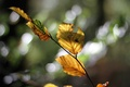 Picture branch, glare, autumn, leaves