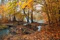 Picture autumn, nature, fog, pond, yellow leaves, the bridge