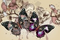 Picture flowers, color, vector, wings, background, butterfly