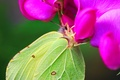 Picture butterfly, green, nectar, wings, flower