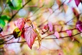 Picture macro, nature, red, bokeh, tree, yellow, branches, autumn, Leaves