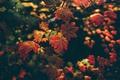 Picture nature, foliage, autumn, branch, macro