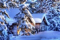 Picture Alaska, ate, snow, winter, hut, nature, forest