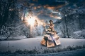 Picture clothing, packages, girl, forest, winter