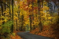 Picture Park, hdr, leaves, leaves, path, trees, walk, autumn, forest, park, forest, nature, walk, trees, autumn, ...