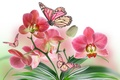 Picture flower, nature, butterfly, petals, Orchid