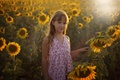 Picture summer, sunflowers, girl