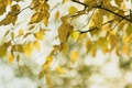 Picture nature, leaves, autumn