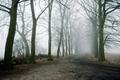 Picture fog, road, trees, landscape