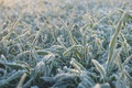 Picture cold, grass, blue