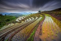 Picture water, rice fields, sprouts, Thailand, the sky, the slopes, excerpt