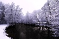Picture water, winter, snow, nature, trees, river, forest