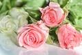 Picture photo, Roses, Flowers, Pink, Three