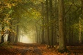 Picture road, autumn, forest, trees, England, England, Ashridge Wood, Forest Ashridge, Berkshire, Berkshire