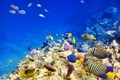 Picture underwater, coral, coral reef, fish, reef, fishes, underwater world, tropical, the ocean, ocean, world