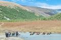 Picture Akkem, Mountains, The Altai Mountains, Belukha