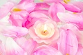 Picture flowers, petals, candle, roses, pink