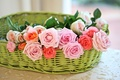 Picture basket, © Elena Di Guardo, roses, buds