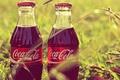 Picture grass, Coca-Cola, label, coca-cola, bottle