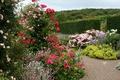 Picture Rosemoor Rose Garden, flowers, garden, England, the bushes, track