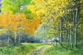 Picture road, trees, autumn, forest, leaves