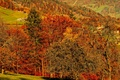 Picture autumn, leaves, trees, mountains, paint, slope