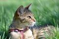Picture cat, grass, cat, grace