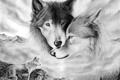 Picture tenderness, look, pair, figure, love, wolves