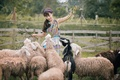 Picture nature, smile, sheep, Asian, the herd