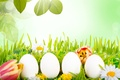 Picture flowers, holiday, nature, grass, tulips, leaves, eggs, Easter, Easter, chamomile, branches, spring