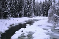 Picture PANORAMA, river, snow, forest, trees