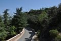 Picture cypress, road, Cyprus, the mountain of Throni, ate