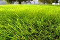 Picture summer, grass, lawn