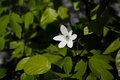 Picture Nature, Earth, Flower, Green, Forest, Leaves, Woods, Ground, Blossom
